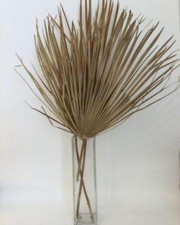 Palmblad - Just Hazel - Gedroogd - Droogbloemen 100% natuurlijk